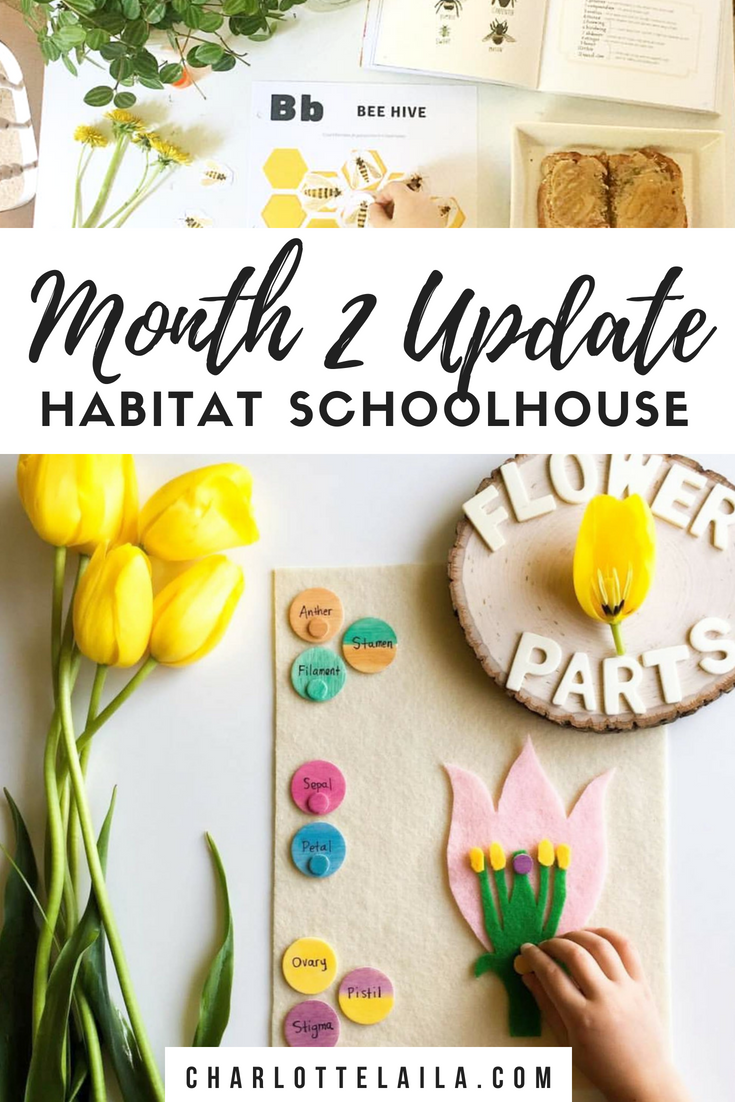 Month two update Habitat schoolhouse