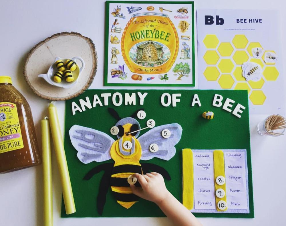 Bee Anatomy Felt Diagram - Wild + Free — Charlotte Laila
