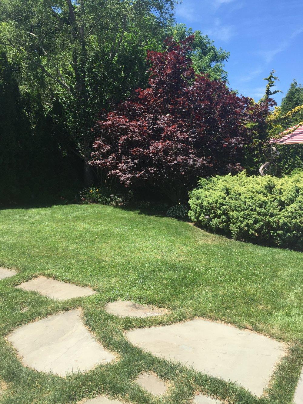 Alexas backyard 5.jpg