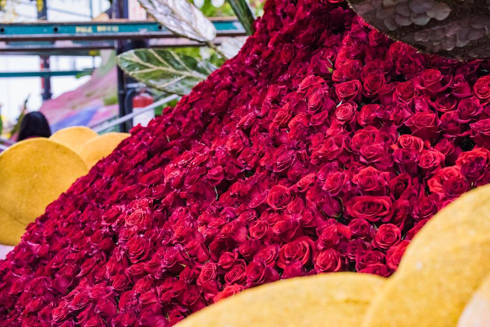 Rose Parade 2017-32.jpg