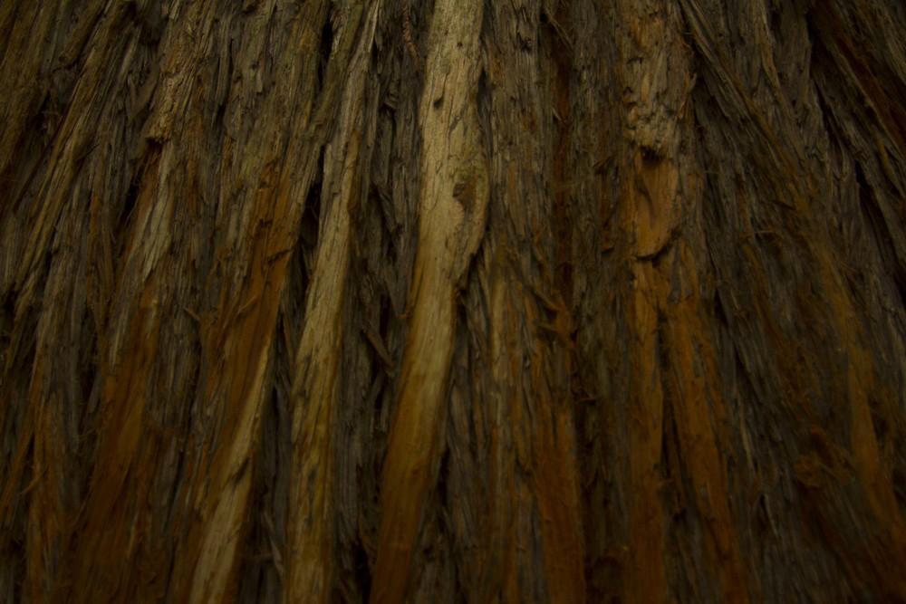 redwoods_1.jpg