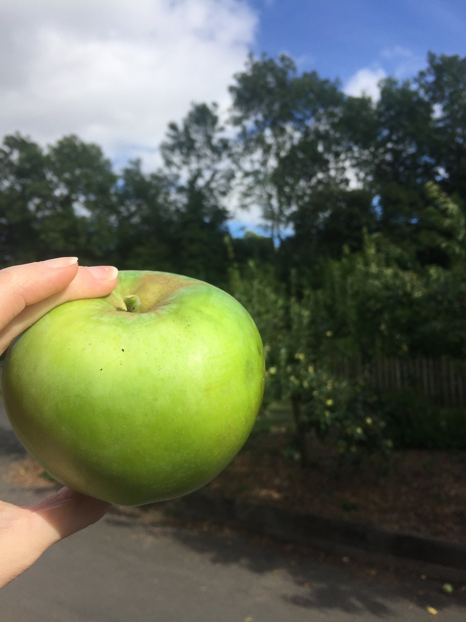apple day 2017 — the green wood café