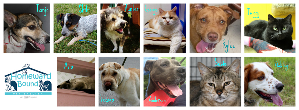 45 days to go before Homeward Bound Pet Shelter closes.  These are just some of the pets looking for a home of their own before August 31, 2016.