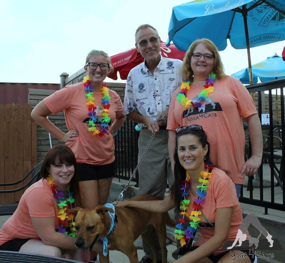 Adopt Kelvin from HSDMC! Team Yoga4Cats at Dog Days of Summer.