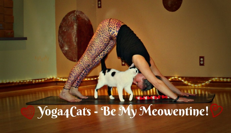 Adrienne Gurley from The Studio Yoga with adoptable yoga cat Breezy.