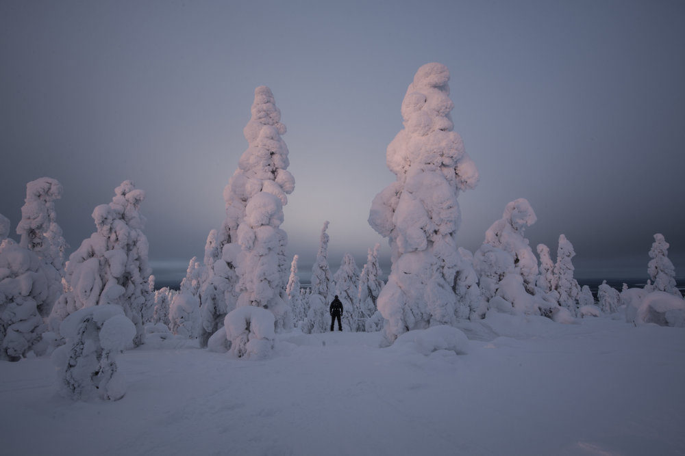 """On top of the fells or """"tunturi's"""", these pine trees straddle the tree line and get dumped on with massive amounts of snow. Towards the end of February/March, the accumulated snowfall combined with freezing cold temperatures makes them look like this."""
