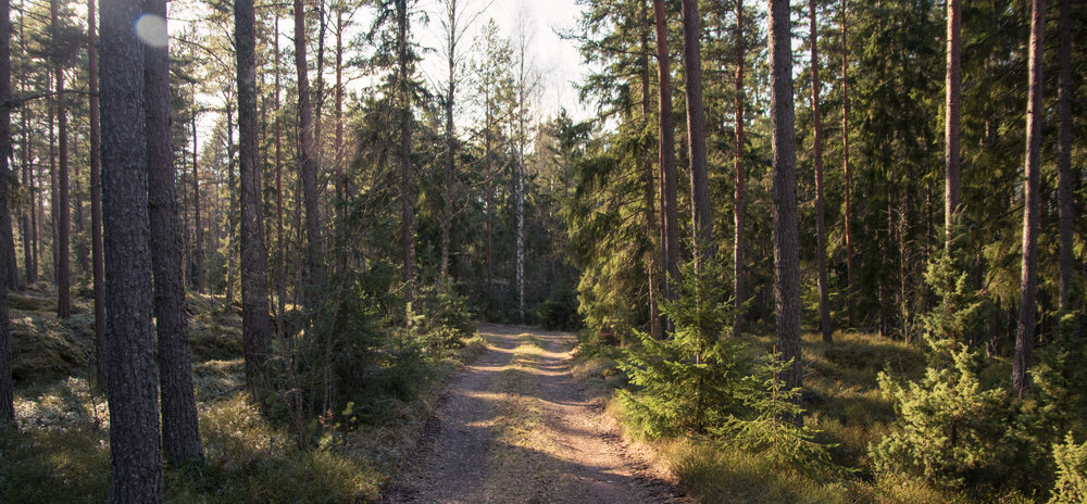 """My Finnish friend Laura invited me to visit her family's """"mokki"""" (cabin) near Kustavi on the coast. This is the road there."""