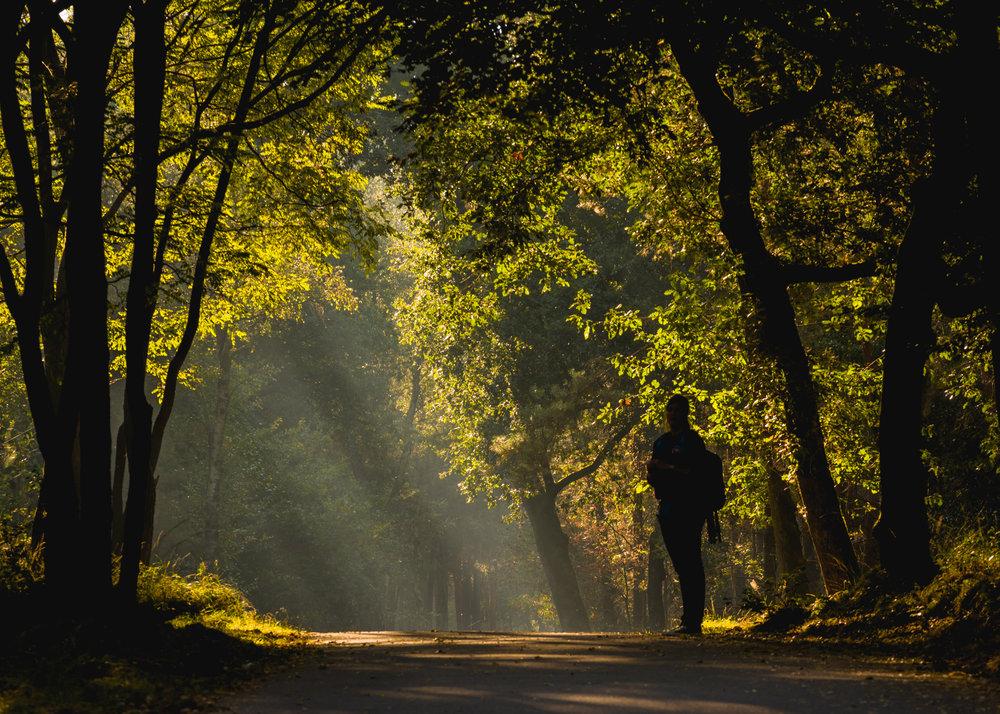 Silhouet in het bos  (Pentax K-1, Sigma 70-200 APO DG HSM, 1/80, F8.0, iso 400)
