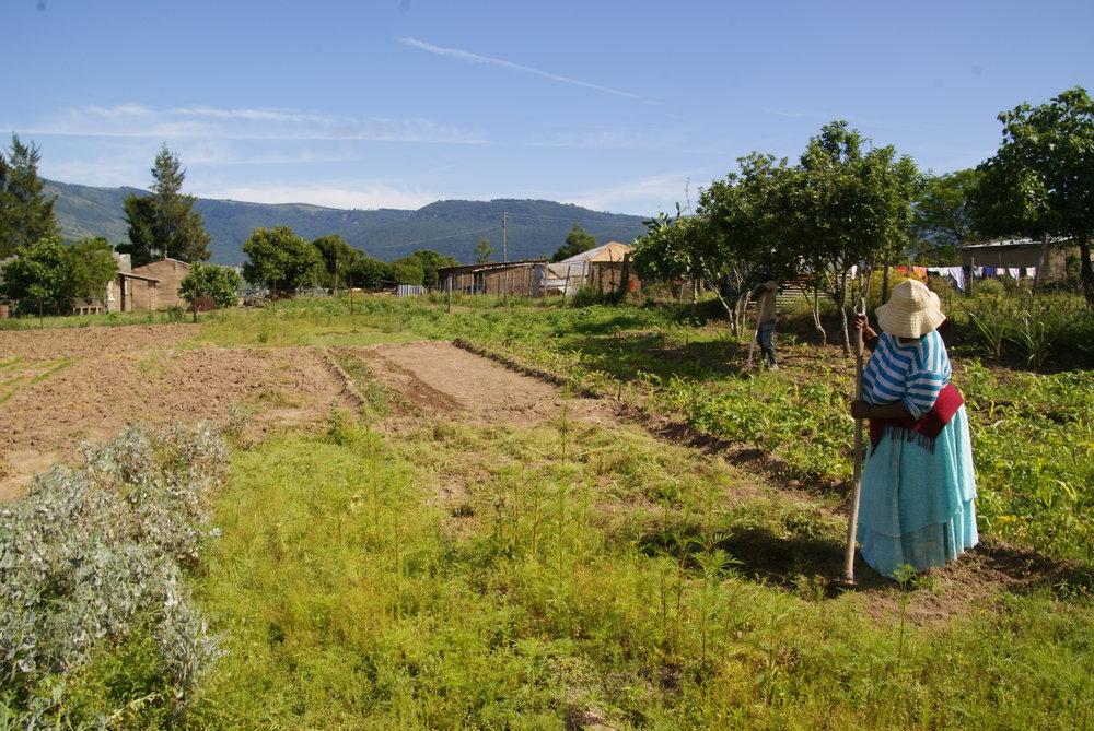 Ms. Magatyeni en haar tuin.