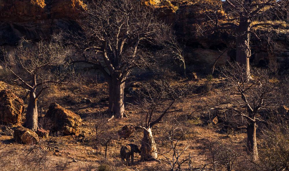 Ellie en de imposante Baobab