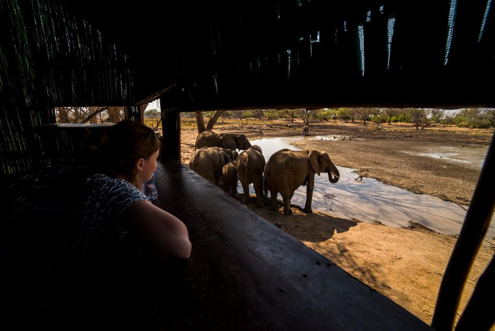 Olifanten op 4 meter