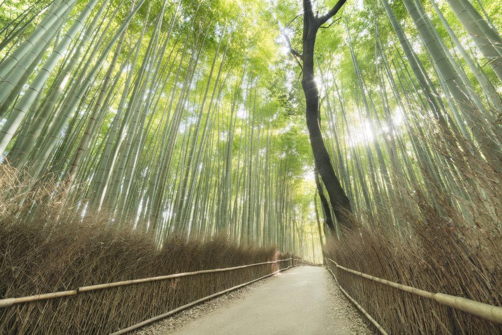 Arashiyama bamboe bos