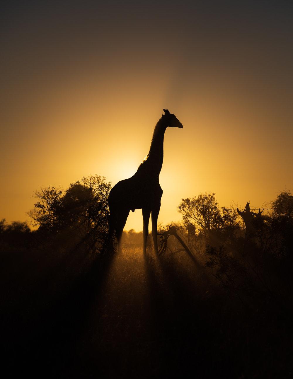 Afrika in één oogopslag?