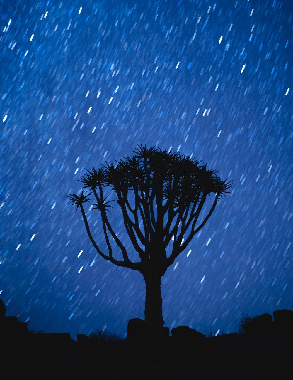 De Kokerboom, Namibië.