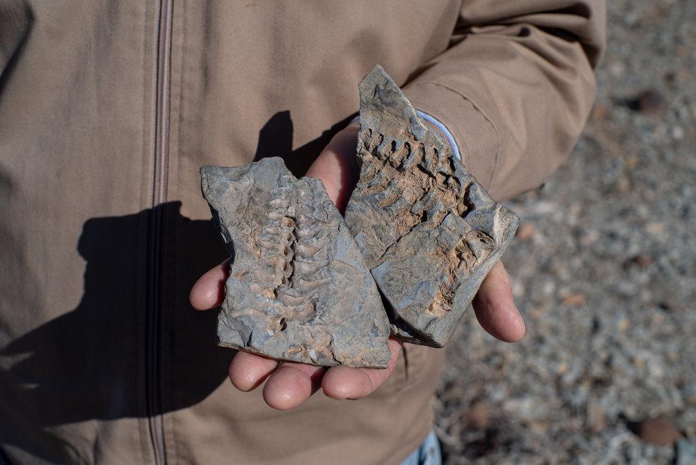 Fossielen - in de Kalahari