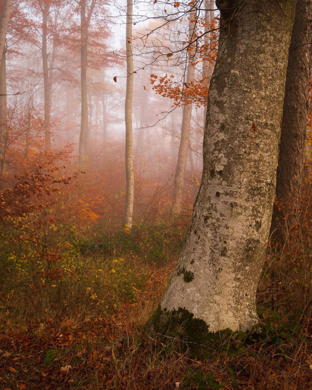 Het bos nabij de Arensberg