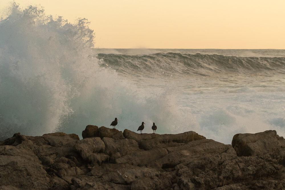 Onverschrokken vogels (1/1250 sec)