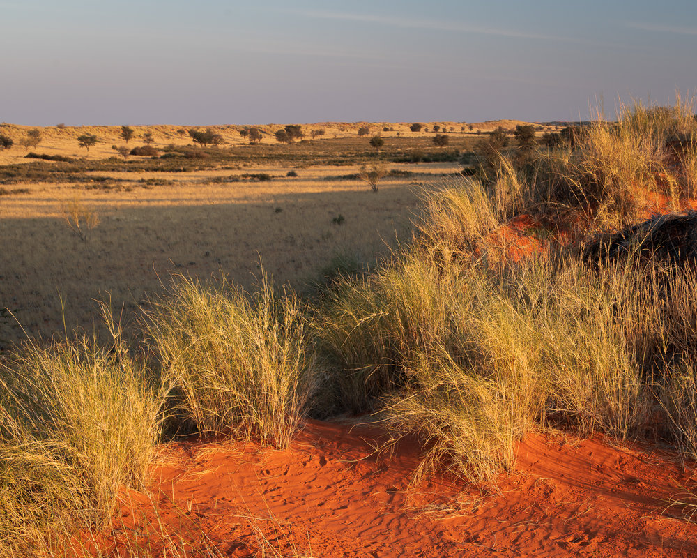 De Kalahari woestijn