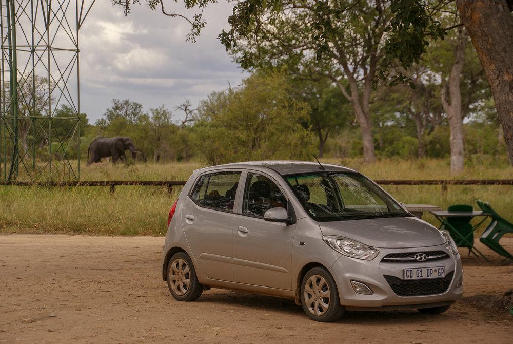 De Toyota i10 in Kruger National Park