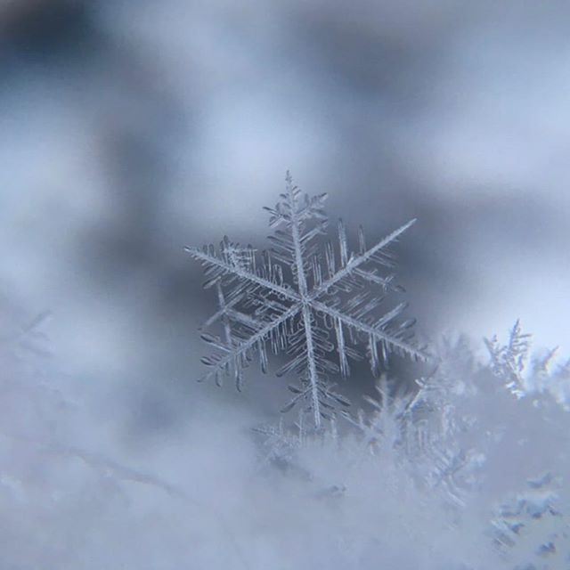 Classes tonight (Tuesday January 29th) have been cancelled due to the snow! Please drive safe!