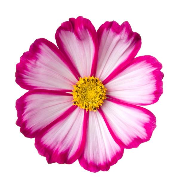 flowerpink.72.jpg