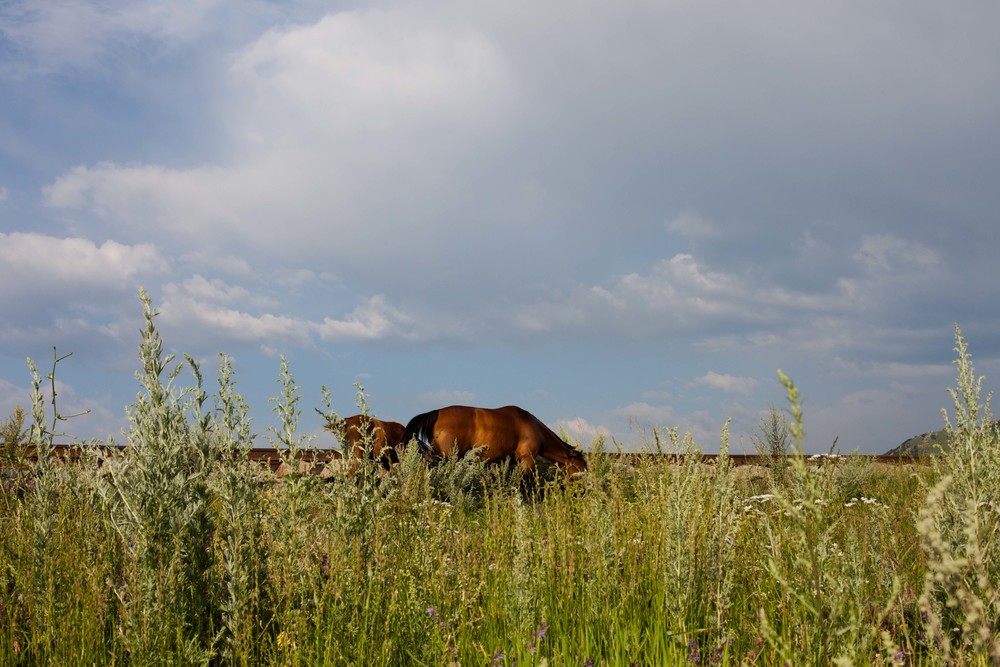 Horses graze along the side of the road in Spitak.