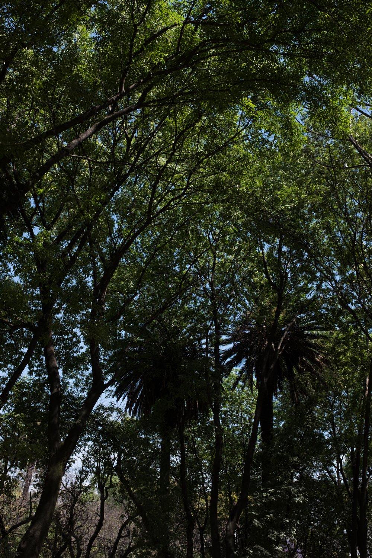 022017_mexico_rc-017.jpg