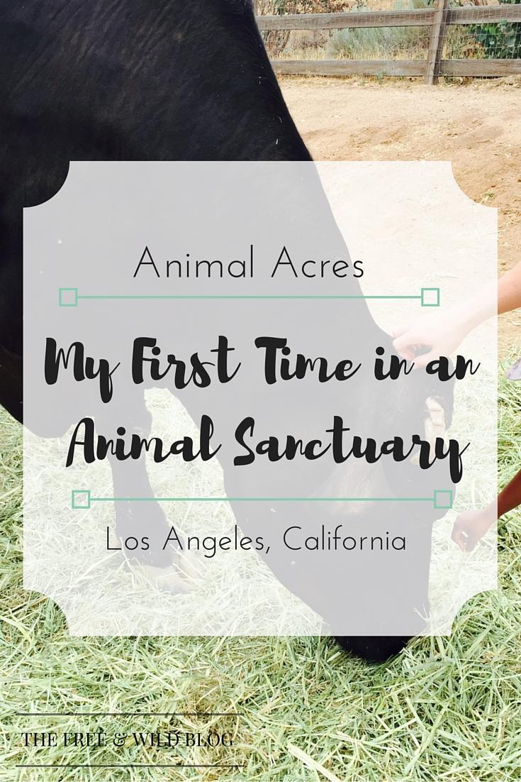 Animal Acres(1).jpg