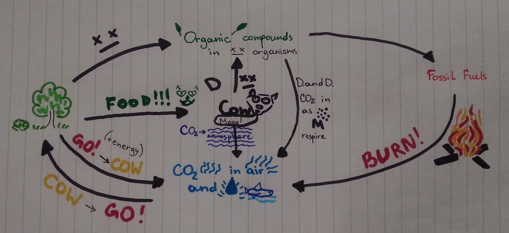 daria-carbon-cycle-small.jpg