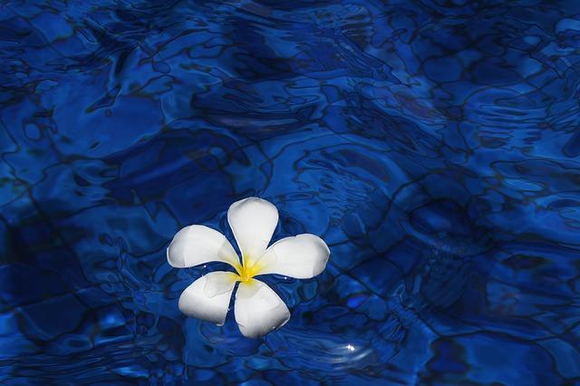 flower-1203563_640.jpg