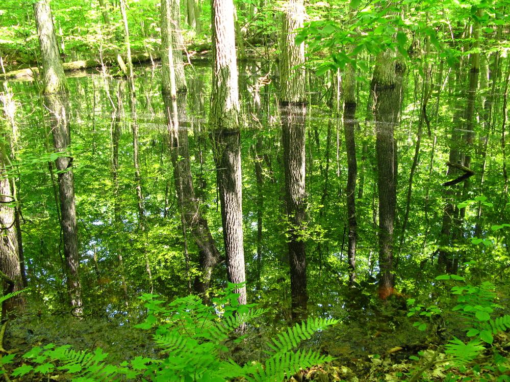 Les 18 Réserves mondiales de la biosphère du Canada   célèbrent la richesse de nos communautés, de leurs environnements et des cultures