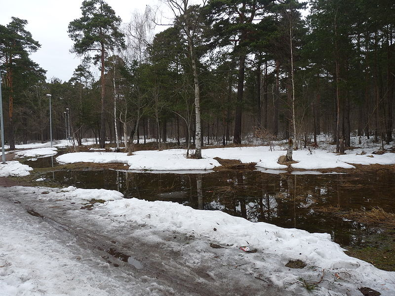 800px-Snow_melting_in_Pirita.jpg