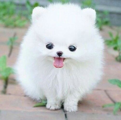 really cute dog 1