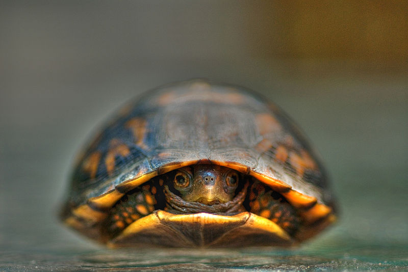 That pre-poop feeling is called the shy-turtle.  And it's only so long until he gets over his social anxiety.