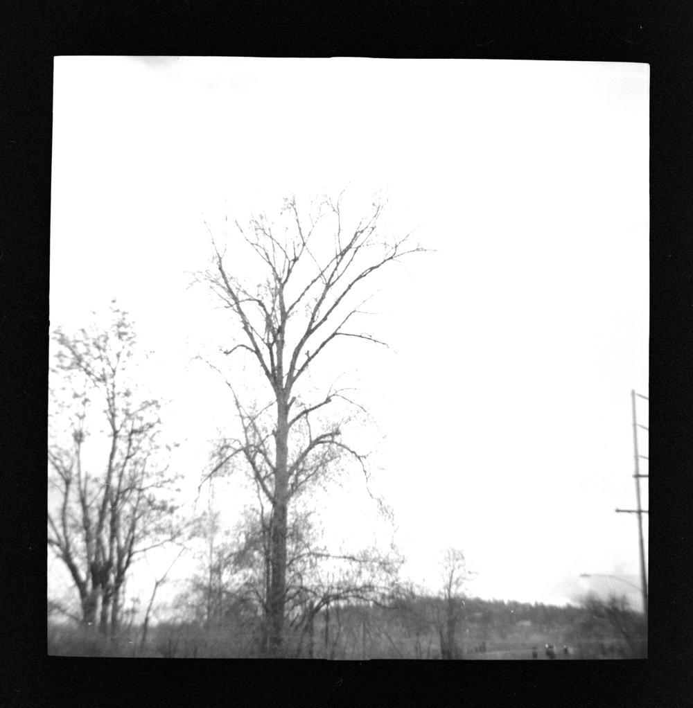 Diana+ Kodak Porta 400 B&W 6.jpg