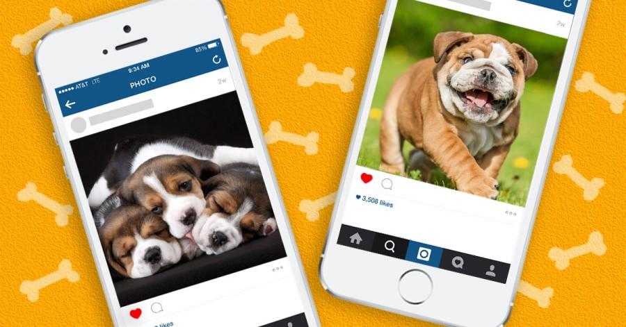 dog_instagram_cover-e1442513301938.jpg