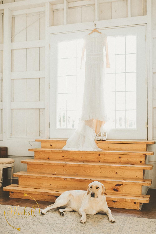 Wedding Gown Guard Dog