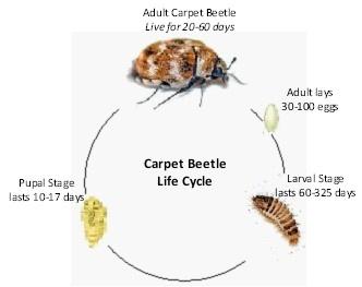 Swansea Pest Control Services Domestic Amp Commercialbeetle