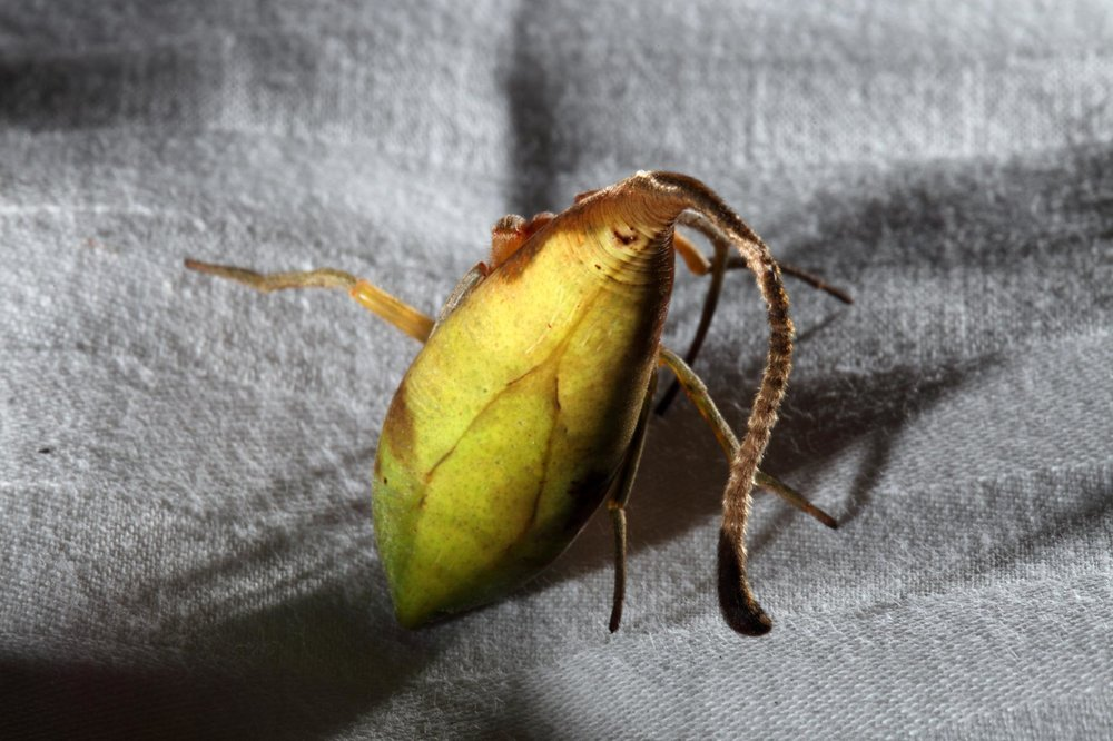 leaf-spider-02.ngsversion.1479303009221.adapt.1900.1.jpg