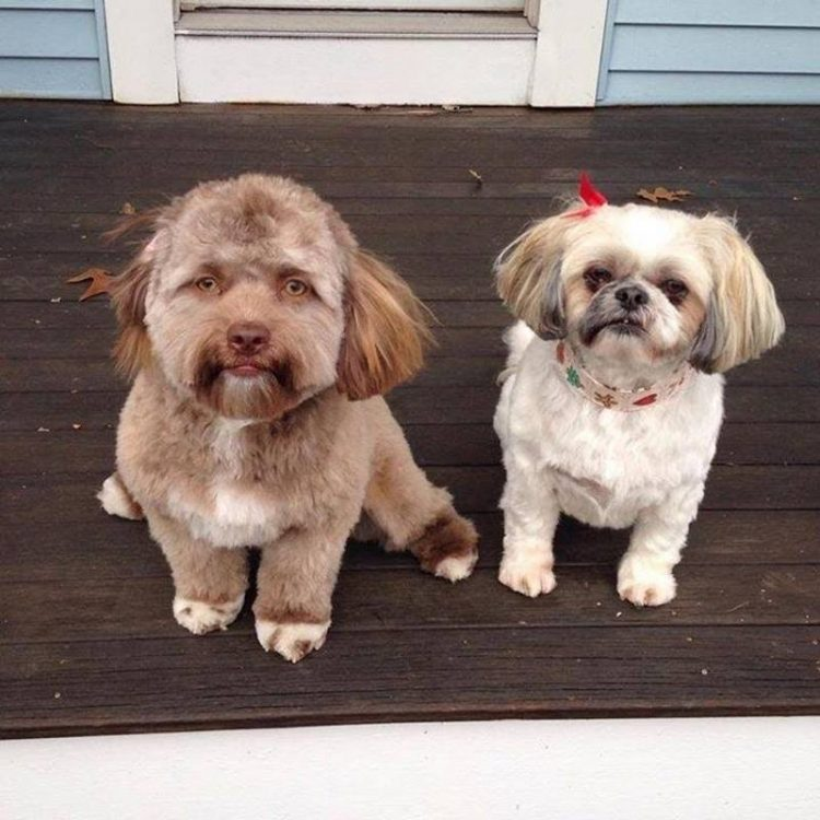 Yogi-dog-human-face-750x750.jpg