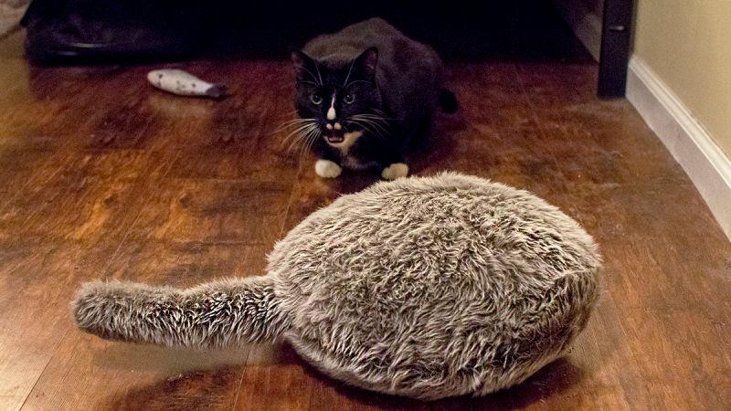 fake-cat.jpg