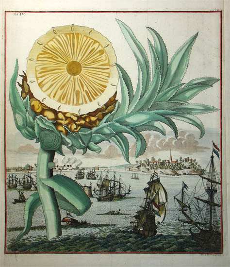 pineapple-tab.-iv-from-nuernbergische-hesperides-j.a.-endter-sohn-und-erben-nuremberg-1708-and-1714.jpg