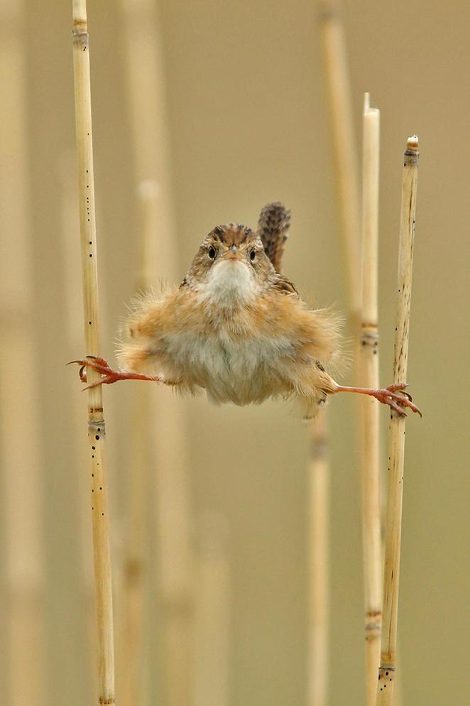 bird-gallery.jpg