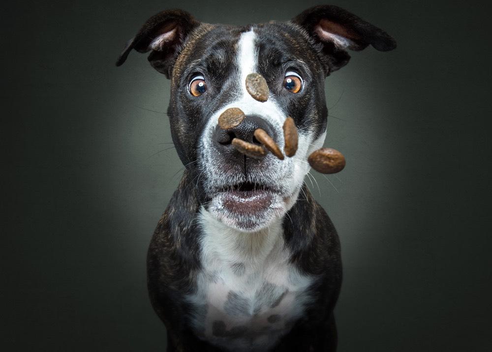 dogs-catching-treats-01.jpg
