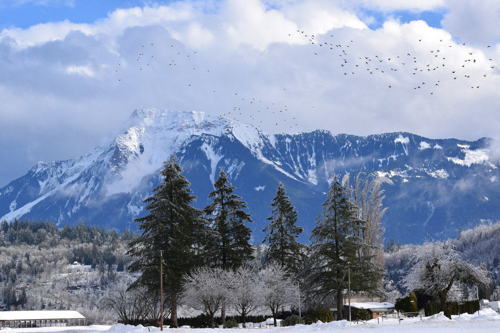 Mount Cheam, Agassiz British Columbia