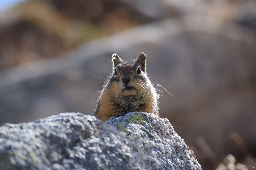 Why The Face? I wonder what is going going thru this high mountain squirrels mind...