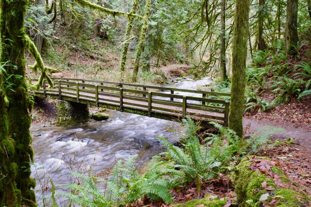 The interurban trail bridge at Arroyo Park today on the way back from Chuckanut Falls.