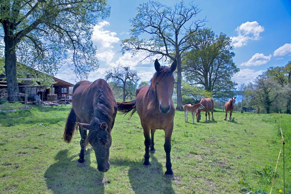 pferde in ammerland
