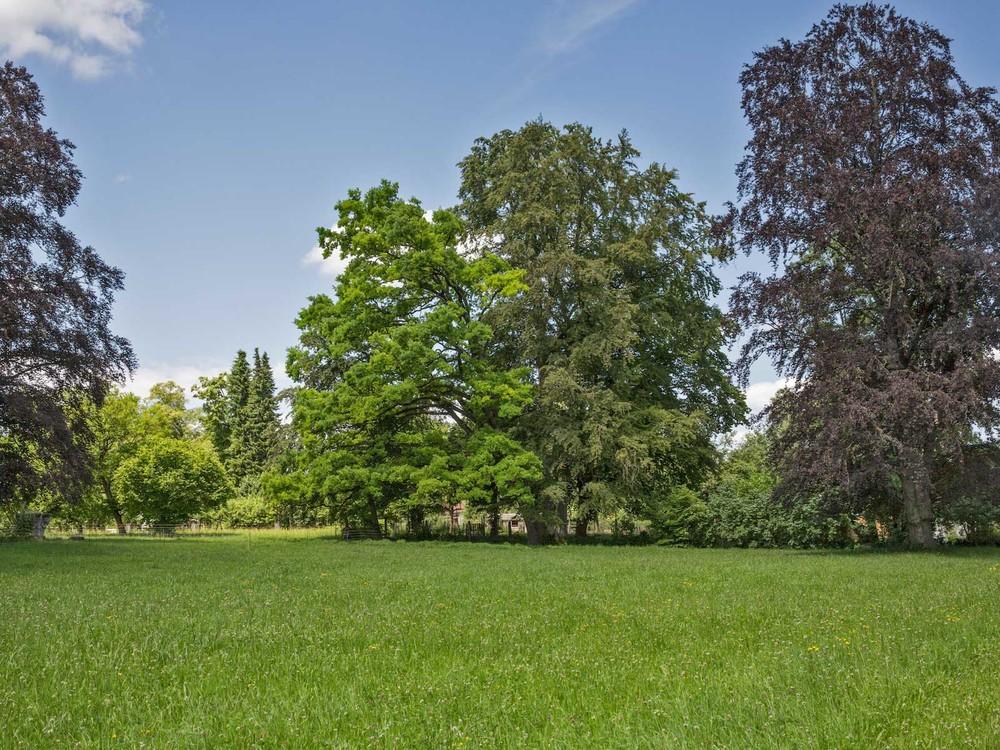 Parkbäume_Schaki_T8B3824.jpg