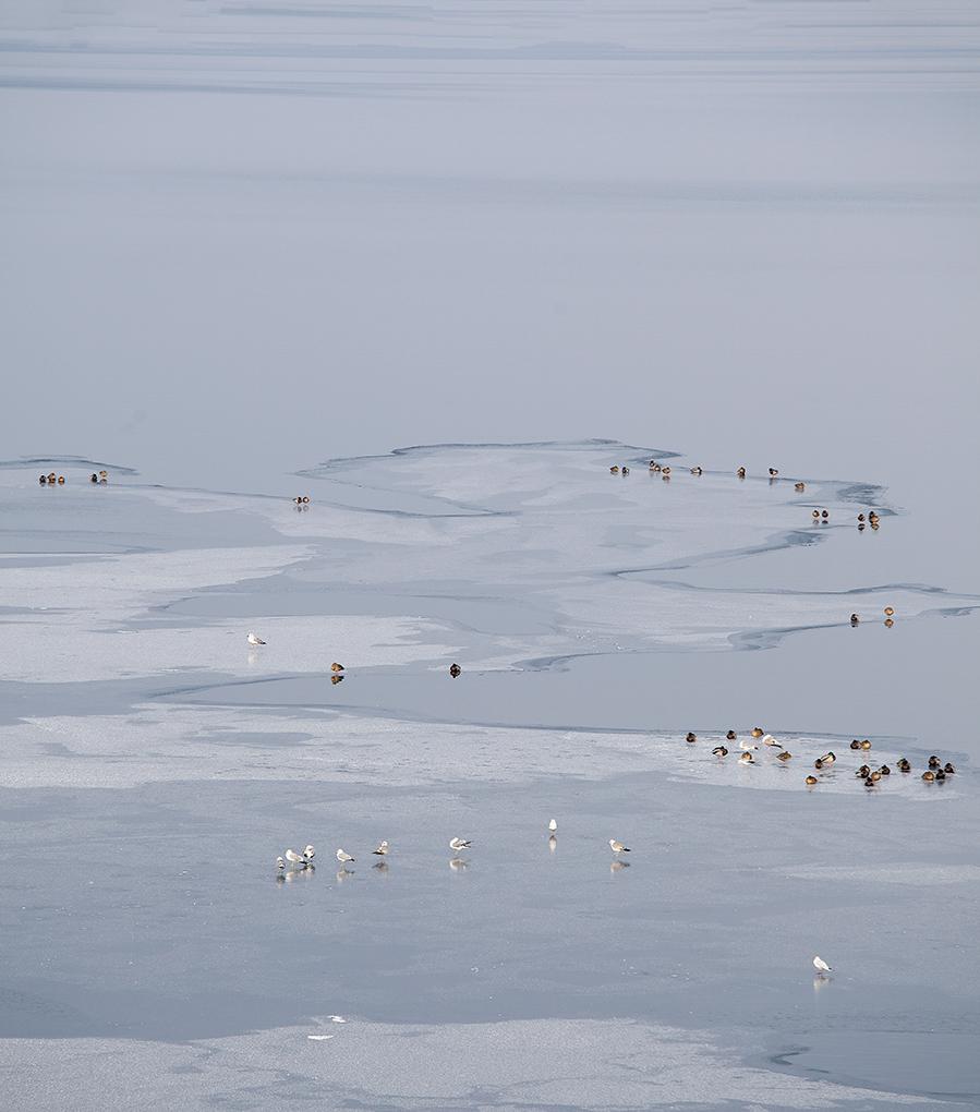 Wasservoegel-Eis-Seeshaupt.jpg